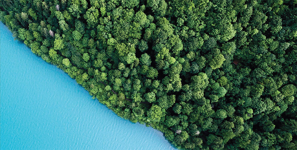 forest bordering crystal blue water