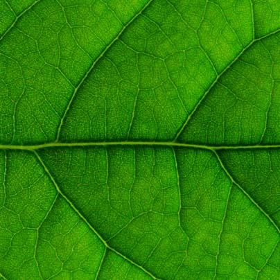 leaf up close