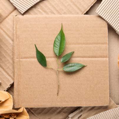 plant leaves on cardboard