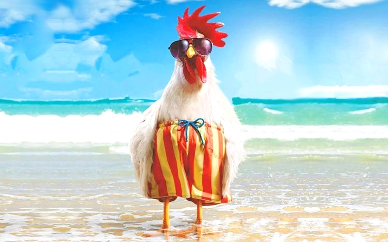 Read more about the article Chicken cleaning and heat treatment. What?